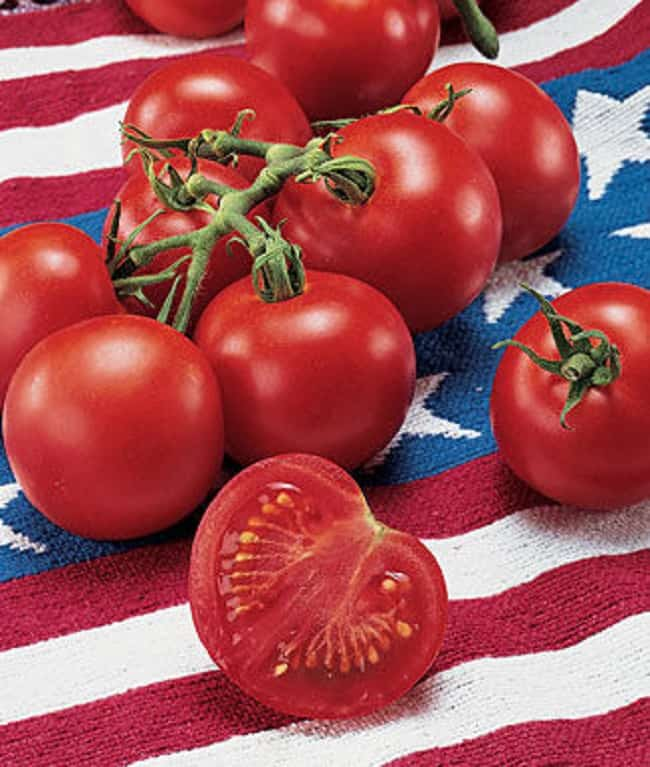 fourth of july tomato